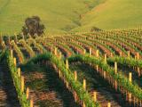 Wine Tour To Moldova (5 Days/4 Nights) Packages